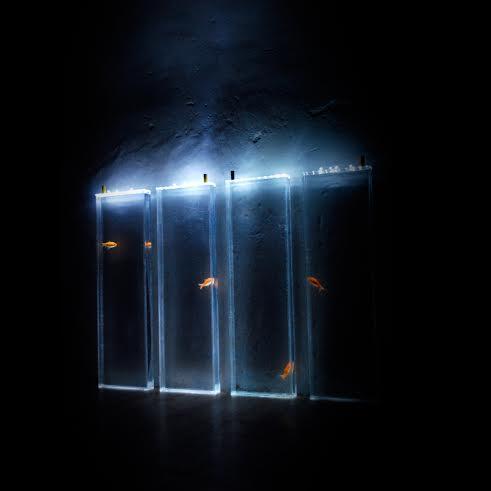 vasche verticali con pesci rossi illuminate nel buio