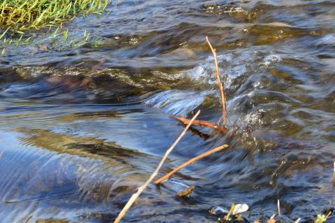 corso d'acqua con sassi e arbusti