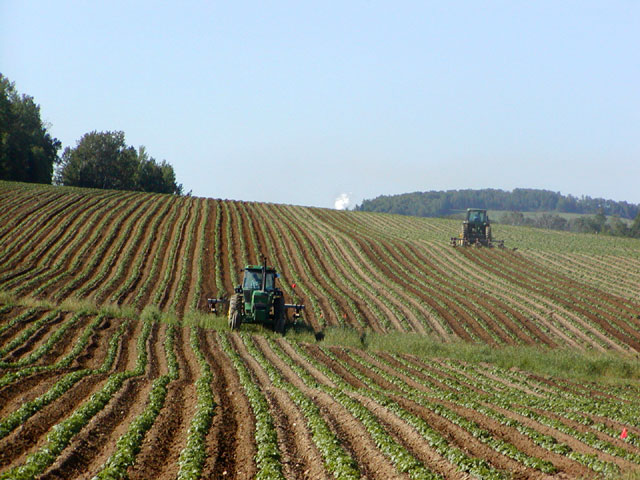 Tractors in Potato Field