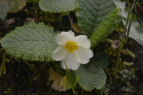 """L'angolo della poesia: """"Rosa bianca"""" di Lucia Bonanni"""