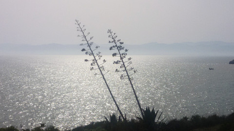 piante che si stagliano sul mare