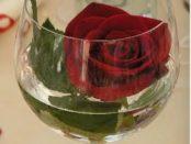 rosa rossa in un bicchiere