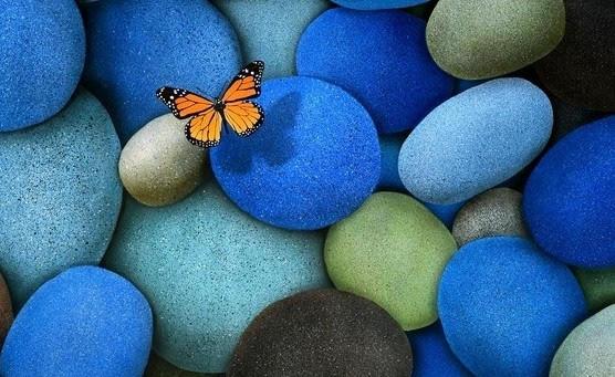 farfalla posata su sassi