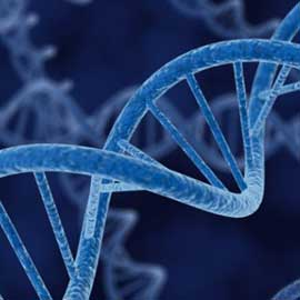 Oltre il DNA: organismi artificiali