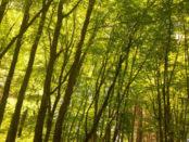 bosco di Soveria Mannelli