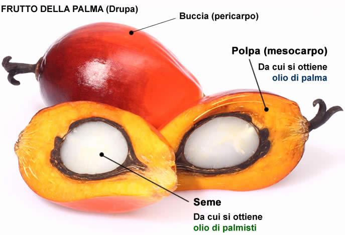 Che cos'è l'olio di palma? In questo video #Te lo spiego