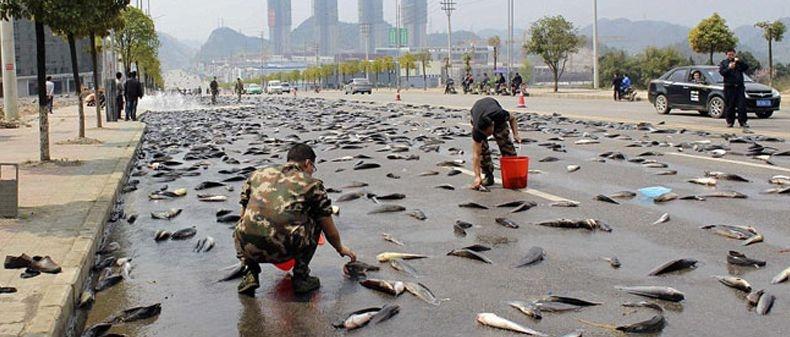 In Honduras piovono pesci