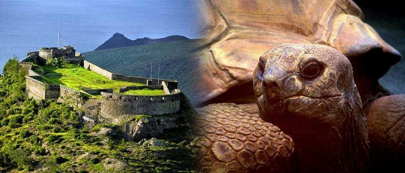 Sant'Elena e le tartarughe