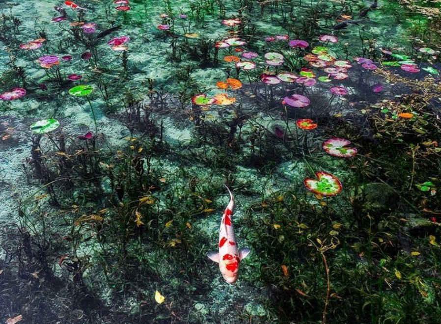 """In Giappone è sorto lo """"Stagno di Monet"""""""