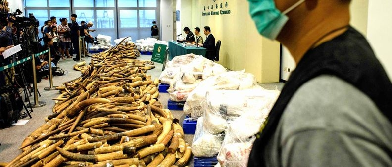 Vietato l'avorio a Hong Kong
