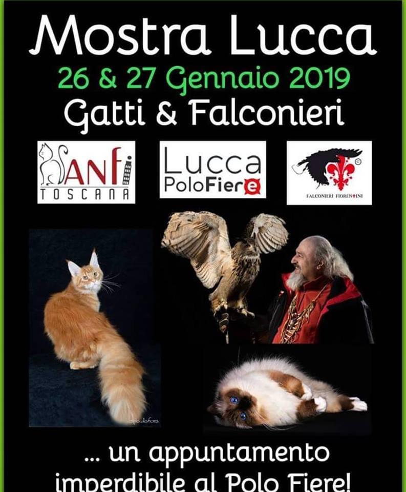 Lucca: Torna l'Esposizione Internazionale Felina, sotto l'egida di ANFI e Fife