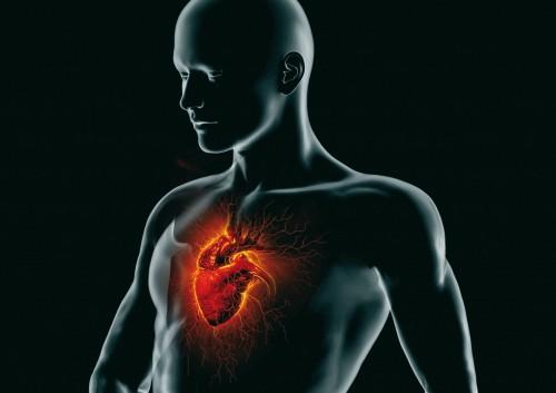 MALATTIE CARDIOVASCOLARI E DA STRESS/DISTRESS